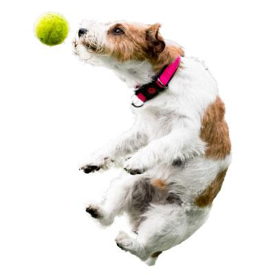 Broadband VoIP IT Solutions   Tatton Tech   Jumping Dog